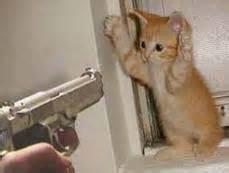 catunder gun