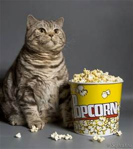 popcorn&cat