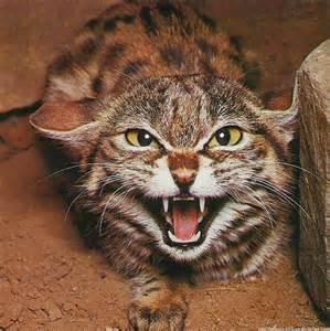blogterrorcat
